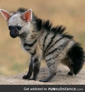 And Aardwolf pup. I  think I need one of these too
