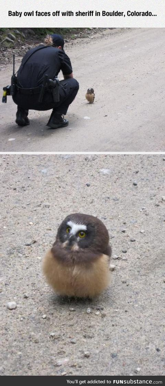 Curious fluffy little owl