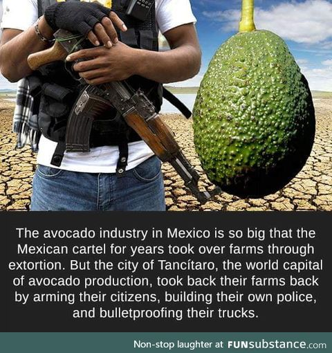 Avocado for the people