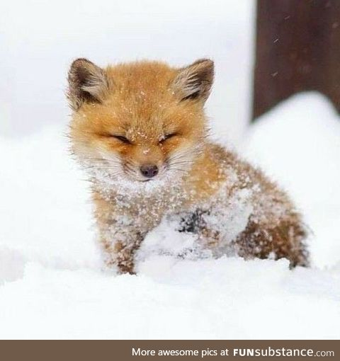 Day 628 of your daily dose of cute: What does the fox say?