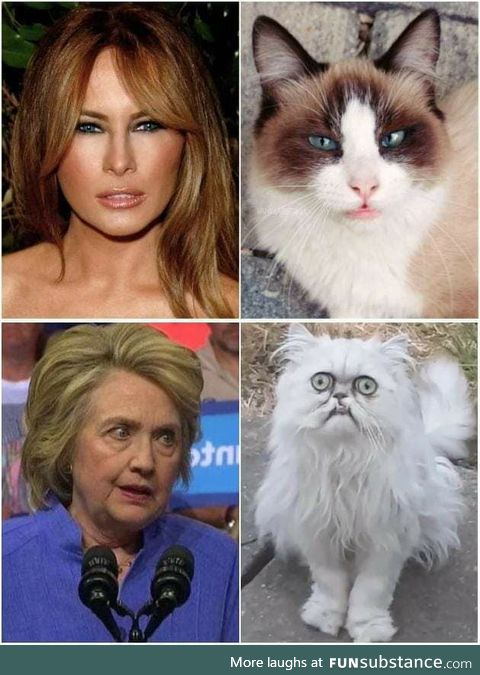 If they were cats