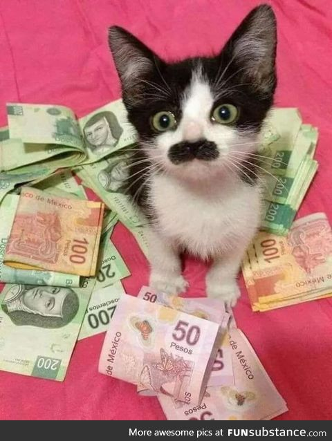 This is Carlos el gatito, infiltrated cop in the Mexican drug cartel. Just upvote and