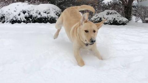 Animals enjoying the snow (FeelGoodSubstance)