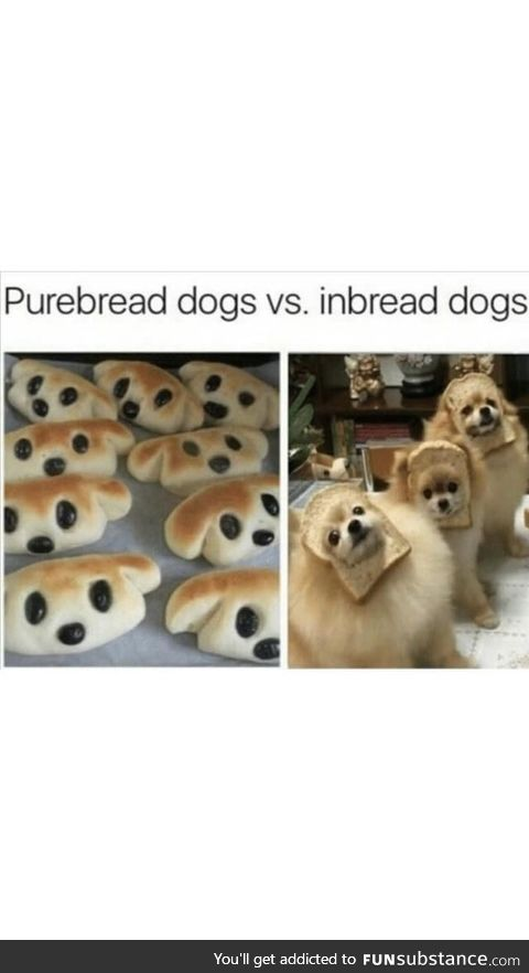 The best kind of dogs
