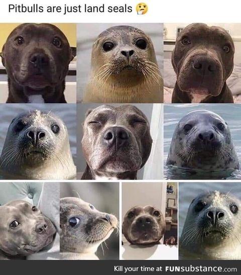 Land seals