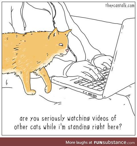 Kitty is not pleased with your internet history