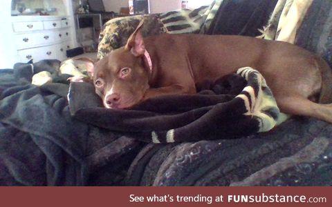 new doggo