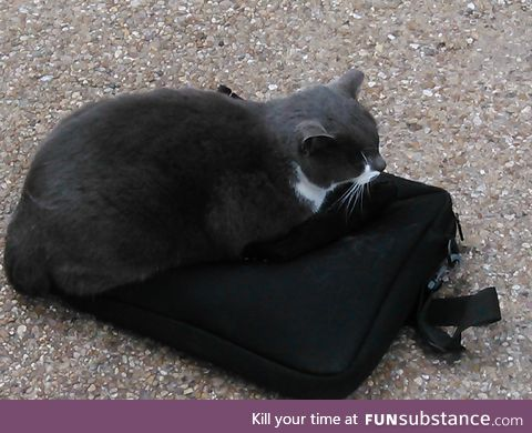 This is Pangur. Also a Campus Cat. He decided my laptop case was an excellent bed.
