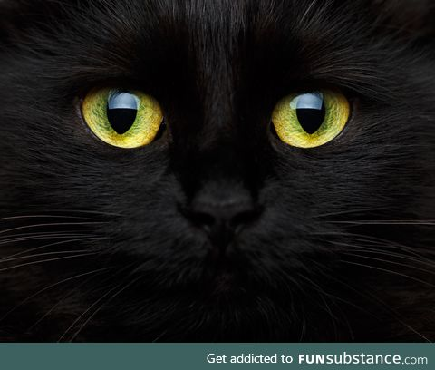 These high resolution cat eyes are magestic af