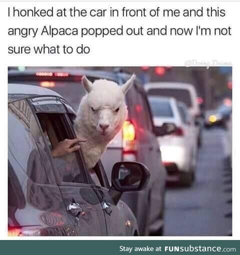 Don't mess with the alpaca