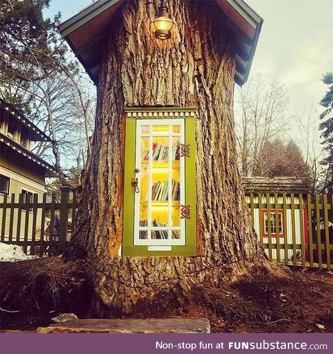 Librarian turns old growth tree stump into a neighborhood library