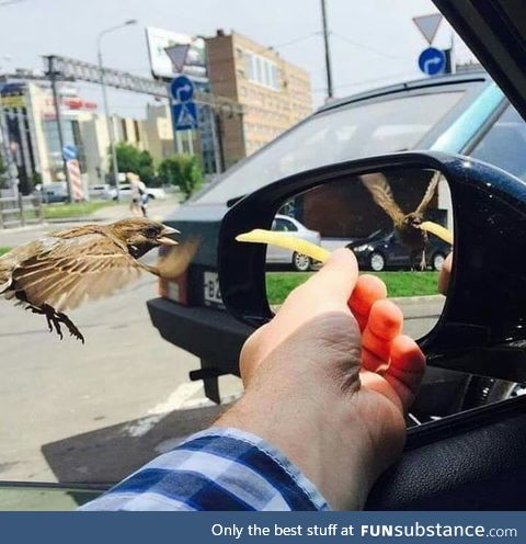 Same time Different wings position in the mirror