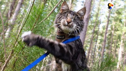 Nina the blind cat who loves exploring. A little something for the cat-lovers on the site