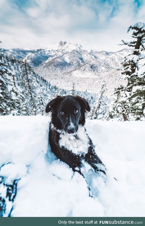 Took my dog snow hiking for the first time!