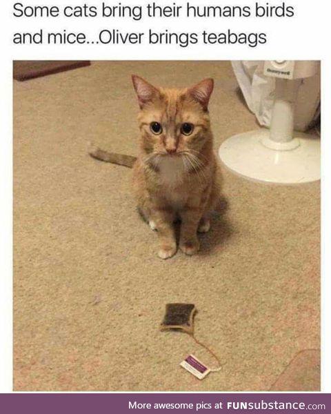 British cats