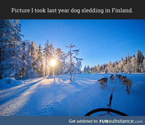 Picture I took last year dog sledding in Finland.