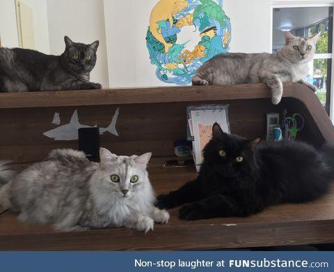 Half of my kitty clan