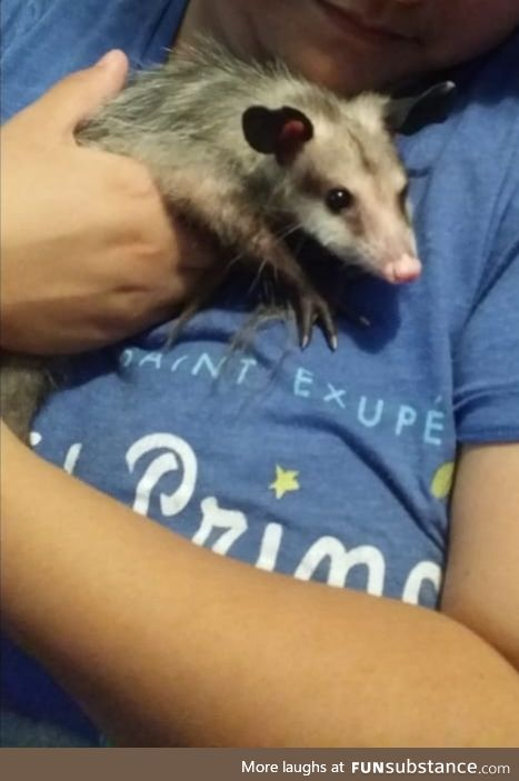 This is Momo the possum