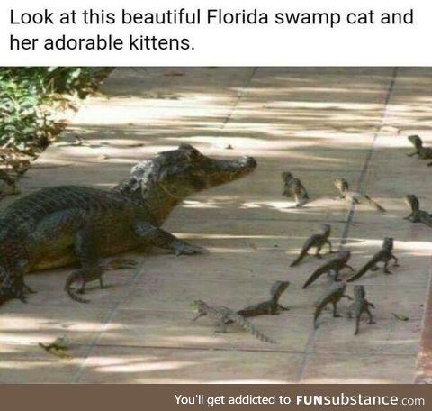 Swamp cats..... Frickin nuisance