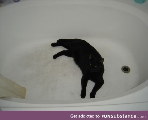 Jellybean, laying in a large tub. He passed last St. Patrick's day