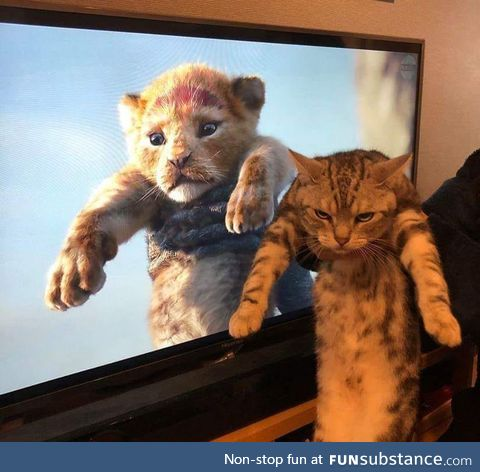 """The """"Lion King"""" at home"""