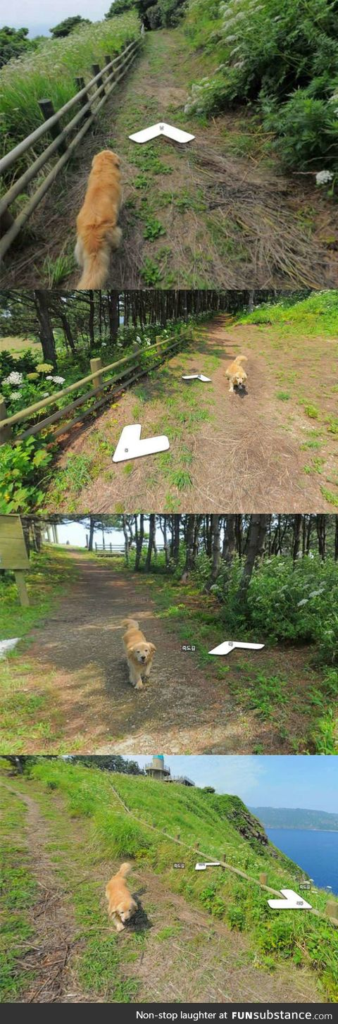 This dog followed the google earth guy