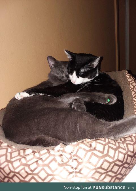 Cuddly kitties