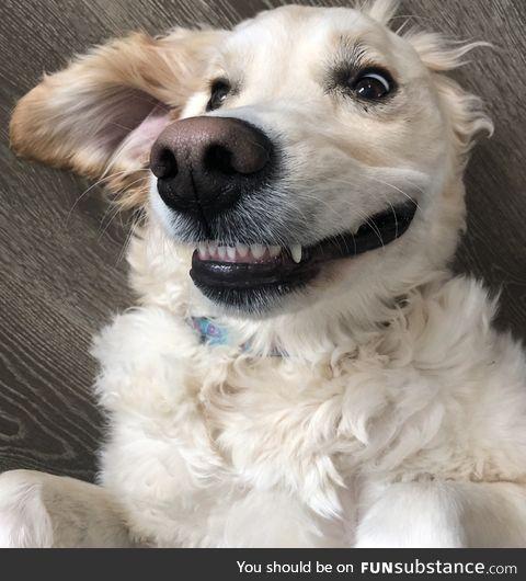 Daily Dose Of Doggo #1 - Smile Doggo :)