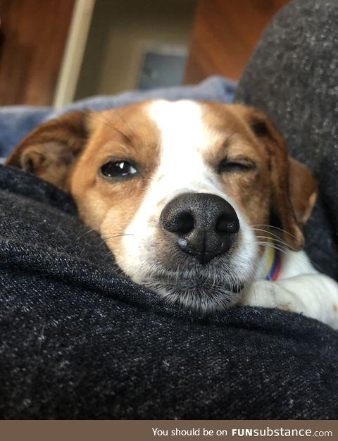 Daily Dose of Doggo #2 - Wink Doggo