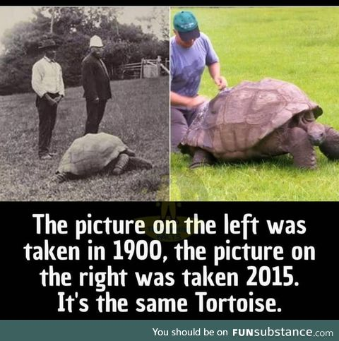 What an old tortoise!