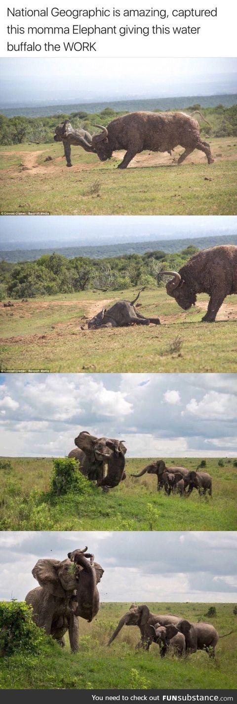 Mom elephant protect