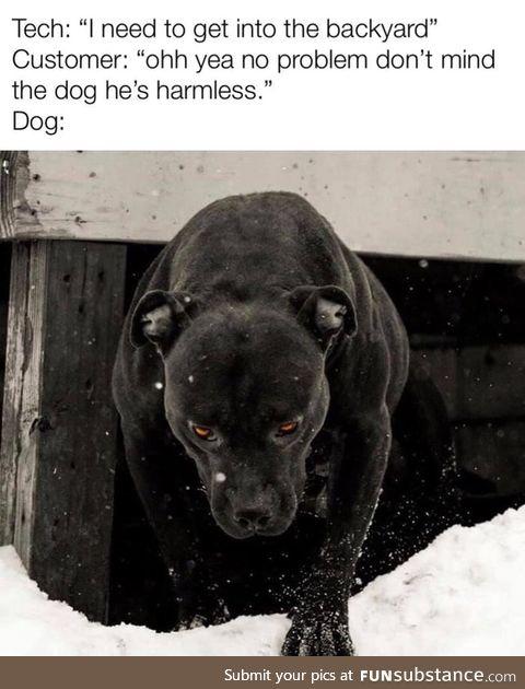 Don't worry he's harmless