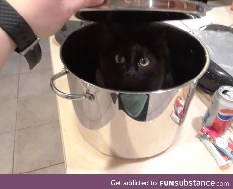 my kitten hanging out in a pot