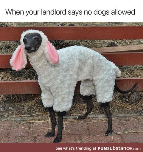 How to trick your landlord 101
