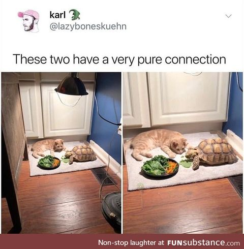 Eat your vegges