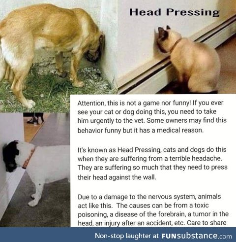 Head Pressing isn't fun and laughter for pets
