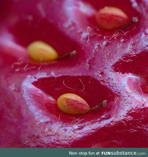 Magnified surface of a strawberry
