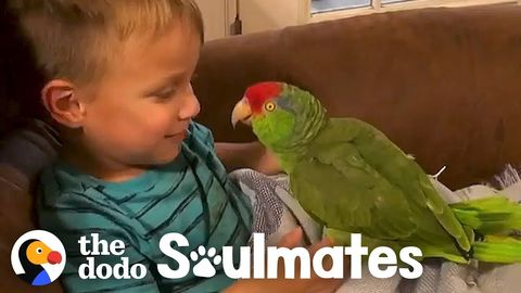 Wyatt and Jax - a little boy and the parrot that follows him everywhere