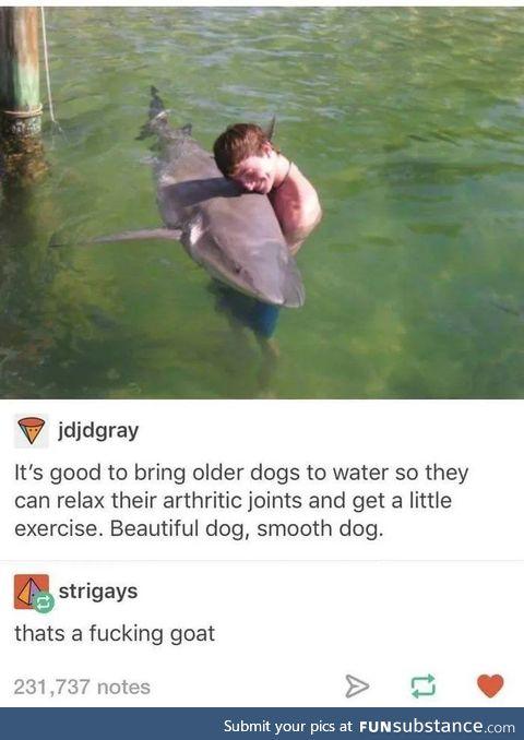 Its a good boy