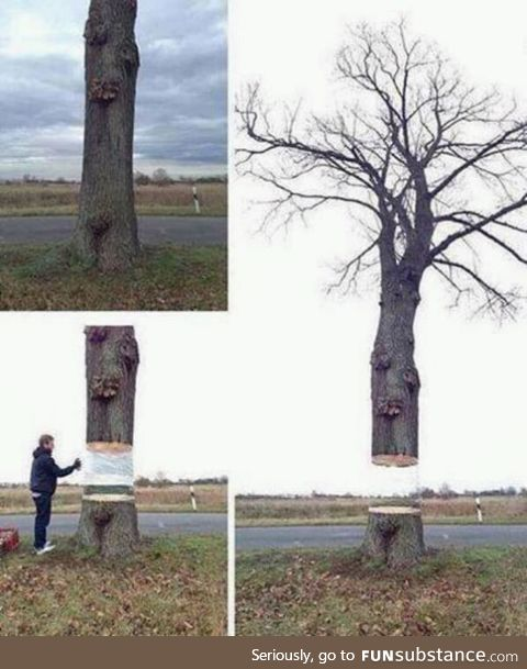An artist wraps a white sheet around a trunk and paints it in colours of the surroundings
