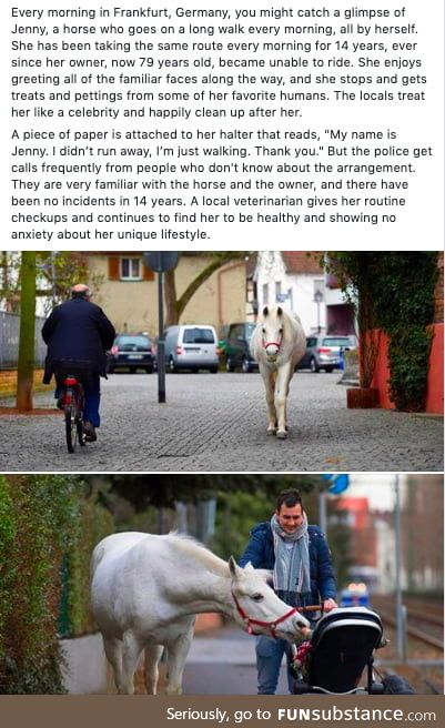 Jenny is the best horse ever. Be more like Jenny