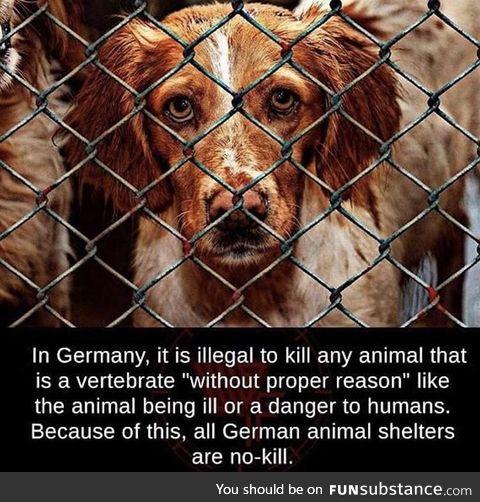 Germany loves vertebrates