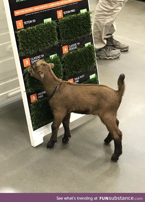 If it's good enough for the goat, it's good enough for your lawn