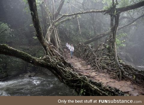 A bridge made out of trees