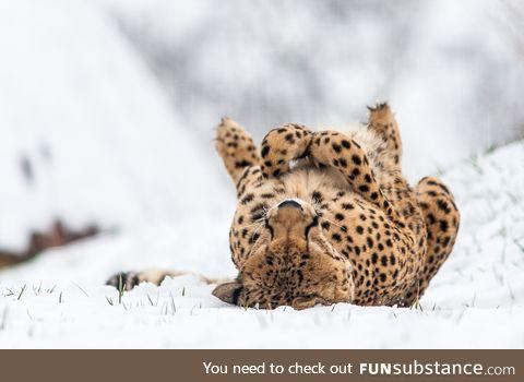Freezing Underrated Cheetah