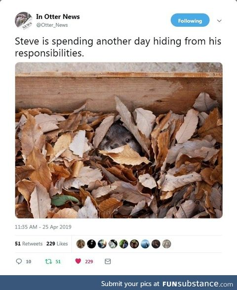 Steve is spending another day hiding from his responsibilities