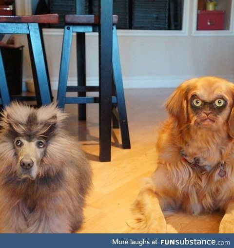 Cat and Dog faceswapped