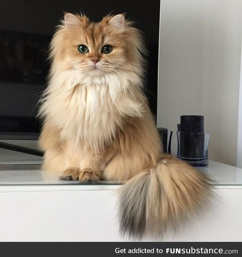 Smoothie the cat is the definition of cute