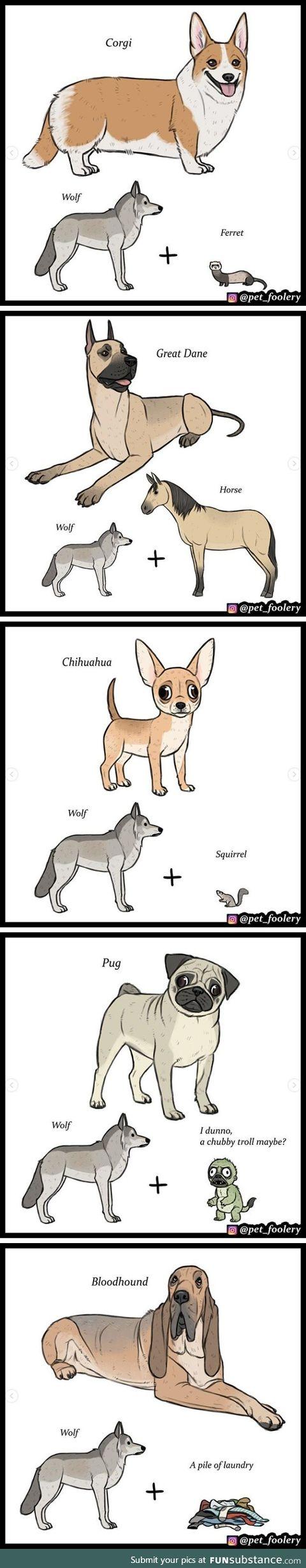Dog breeds by petfoolery