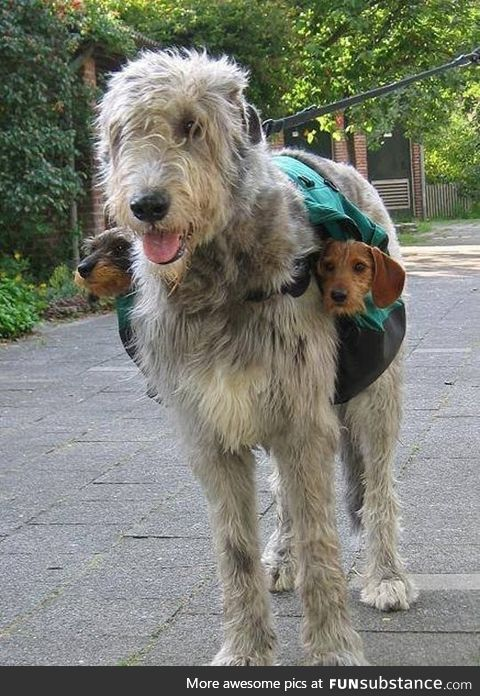 Dog and 2 subwoofers